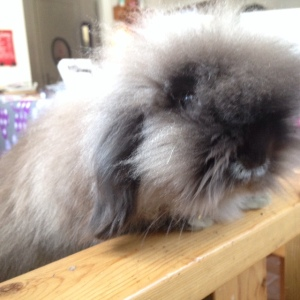 pompe kanin